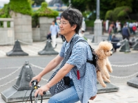 Cycling  1705071105 Tokyo. Taking the dog for a ride. : Countries & Places, Cycling, Fauna, Individuals, Japan, Nature, People, Tokyo